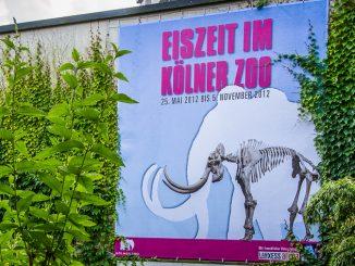 Eiszeit im Kölner Zoo