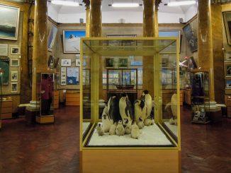 Arktis und Antarktis Museum