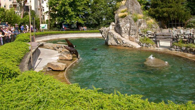Kölner Zoo - Seelöwenfütterung